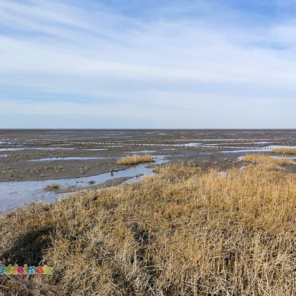 Mutter-Kind-Kur an der Nordsee während Corono - Wattenmeer